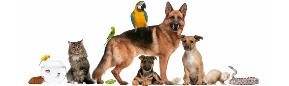 How In order to Perform The german shepherd puppies for sale in new mexico particular Bird Canine Exercise